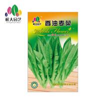 香油麦菜 花种子(大袋)松大园艺四季种花种子盆栽四季景观花卉