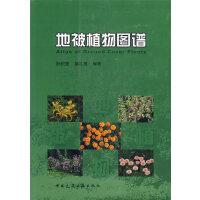 地被植物图谱 阮积惠,徐礼根著 9787112086825 中国建筑工业出版社书源图书专营店