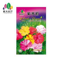 紫茉莉 花种子(大袋)松大园艺阳台盆栽*花卉种子 适合四季播
