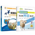 【全2册】肉羊规模化生态养殖技术+彩色图解科学养羊技术肉羊养殖书生态养羊技术大全书养殖场建设肉羊科学