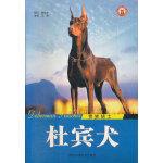 贵族骑士杜宾犬/世界名犬系列