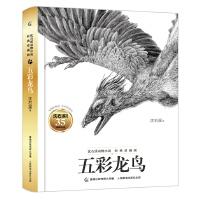 沈石溪动物小说经典爱藏版・五彩龙鸟