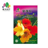 金莲花 花种子(大袋)松大园艺阳台盆栽*花卉种子 适合四季