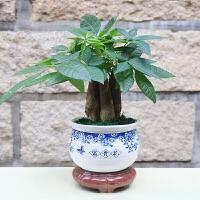 盆栽 室内外办公室桌面绿色植物 组合发财树带盆礼品 含盆