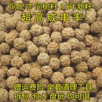 尼泊尔大金刚菩提子4四5五6六瓣散珠通货男女手串原籽批�l108按斤