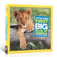 英文原版National Geographic美国国家地理动物百科普Little Kids First Big Boo