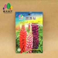 鲁冰花 花种子(小袋)松大园艺花种子盆栽阳台四季种易养易活
