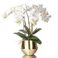 现代风格仿真蝴蝶兰花器客厅书房餐厅桌面花艺软装饰摆件精品花卉SN6174 金色 金铜色花器+花艺