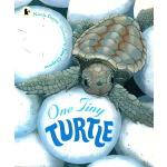 英文原版绘本 One Tiny Turtle STEM百科科普图画书 Walker Nature Story