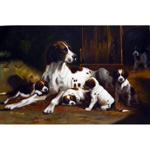 Y341余建生犬
