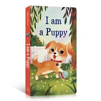 (西文)儿童英文原版进口绘本 I am a Puppy 我是一只小狗 纸板书 0-3-6岁 Golden Books金