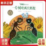 杨红樱童话绘本:一片树叶两只蚂蚁 杨红樱 文、【法】艾莲娜・勒内弗 图 安徽少年儿童出版社 9787539798035