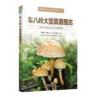 车八岭大型真菌图志(*自然保护区生物多样性保护丛书)(菌物学家李泰辉博士精心之作)