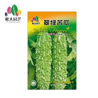 翠绿苦瓜 花种子(大袋)松大园艺四季种花种子盆栽四季种子易活