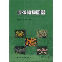 地被植物图谱 9787112086825徐礼根 ;阮积惠中国建筑工业出版社