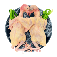 农谣 乳鸽 新鲜鸽子肉 2只装 杀前约1200克 农家散养