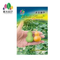手捻葫芦种子小袋松大园艺家庭阳台盆栽精选花卉蔬菜种子易养易活