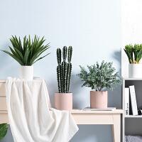 仿真植物仙人掌盆栽 室内客厅绿植摆件 盆景摆设