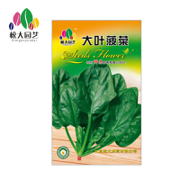 大叶菠菜 花种子(大袋)松大园艺四季种花种子盆栽四季种子易活
