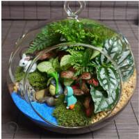迷你创意小盆栽diy材料青苔藓微景观植物可爱室内绿植生态瓶摆件礼品