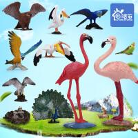 儿童仿真动物园鸟类模型火烈鸟鹦鹉老鹰孔雀猫头鹰男孩女孩玩具套装