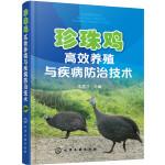 珍珠鸡高效养殖与疾病防治技术