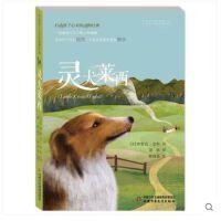 打动孩子心灵的动物经典灵犬莱西 (美)埃里克・奈特 著胡婧 译 儿童文学 中国少年儿童出版打动孩子心灵的动物经典灵犬莱