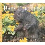 【预订】Baby Porcupine