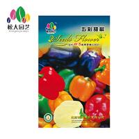 五彩甜椒种子小袋松大园艺家庭阳台盆栽精选花卉蔬菜种子易养易活