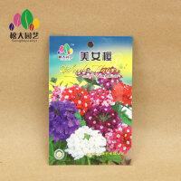 美女樱 花种子(小袋)松大园艺四季种花种子盆栽四季种子易活