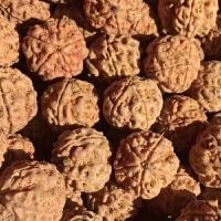 20180923170310612尼泊尔大金刚菩提子通货4四5五6六瓣散珠原籽批�l男士手串108按斤