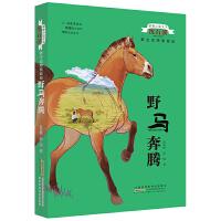 动物小说大王沈石溪:野生动物救助站-野马奔腾