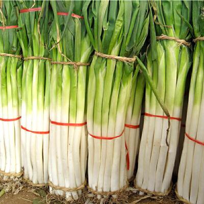 【包邮】农家自种现挖章丘大葱盒装5斤装 新鲜甜脆山东大葱章丘特产去叶 原产地直发