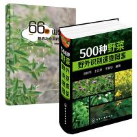 【全2册】正版书籍 500种野菜野外识别速查图鉴+66种山野菜栽培与食用药用大全 野菜栽培种植技术