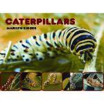 【预订】Caterpillars Y9780979745577