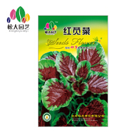 红苋菜菜种子大袋松大园艺四季种菜种子盆栽四季种子易养易活