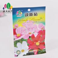 波斯菊 花种子(小袋)松大园艺花种子盆栽阳台四季种易养易活