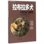 拉布拉多犬的赏玩与训练