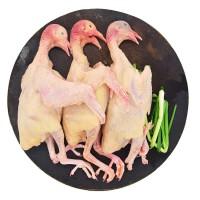农谣 苏北新鲜散养土鸽子肉 3只每只500g乳鸽 顺丰包邮 现杀真空包装冰袋运输 鸽子 家鸽子 肉鸽 散养鸽子 现杀鸽