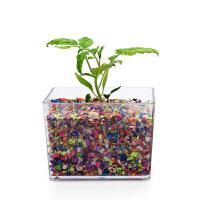凤仙花种子植物七彩纸培盆栽花卉礼物阳台彩色纸栽培绿植