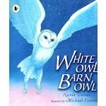 英文原版绘本 White Owl, Barn Owl 小学STEM 科普百科科普图画书 Walker Nature S