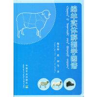 绵羊实体解剖学图谱