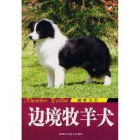【新书店正版】边境牧羊犬智者为王王晓9787536943575陕西科学技术出版社