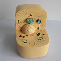 细胞亚显微结构模型 生物实验器材 中学教学仪器