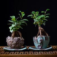 绿色植物榕树盆景办公桌植物花小盆栽室内常绿叶四季常青净化空气