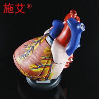 心脏解剖放大模型三倍3倍自然大左右心房心室生物医学医院教学仪器