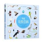 手绘鸟类百科(可以听见鸟鸣声的鸟类趣味百科)