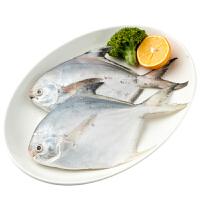 速鲜 舟山新鲜冷冻平鱼200-300g/条 大白鲳银鲳鱼 海鲜水产