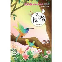 沈石溪激情动物小说(拼音版)太阳鸟