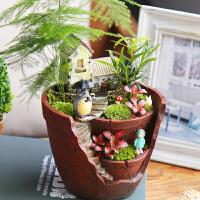 文竹盆栽植物室内绿植罗汉松办公室盆栽